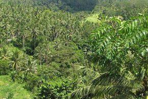 bois exotique en forêt tropicale