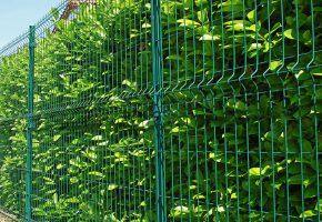 grillage vert et haie de jardin