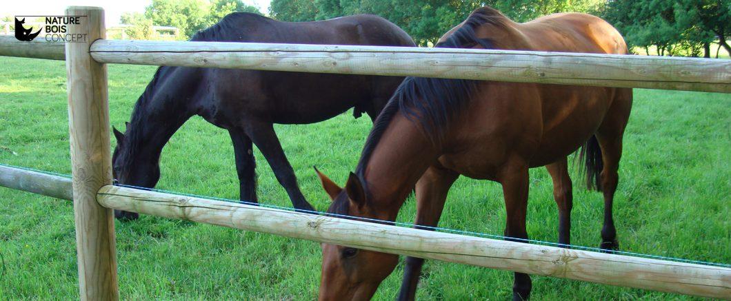 clôture en bois avec chevaux