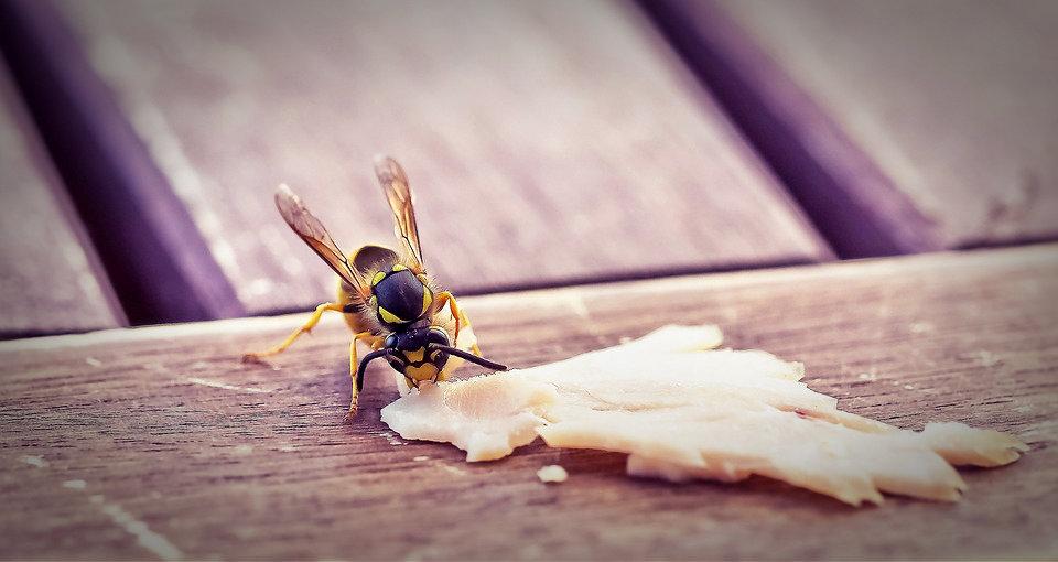 Appâter les guêpes pour les éloigner de la table de votre terrasse